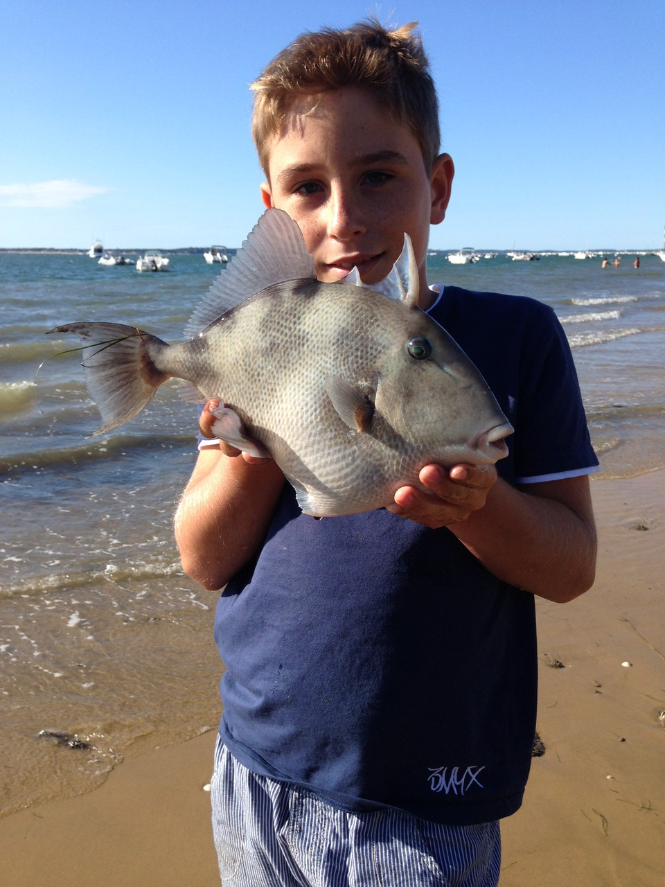 Un baliste pris sur les plages de Pyla