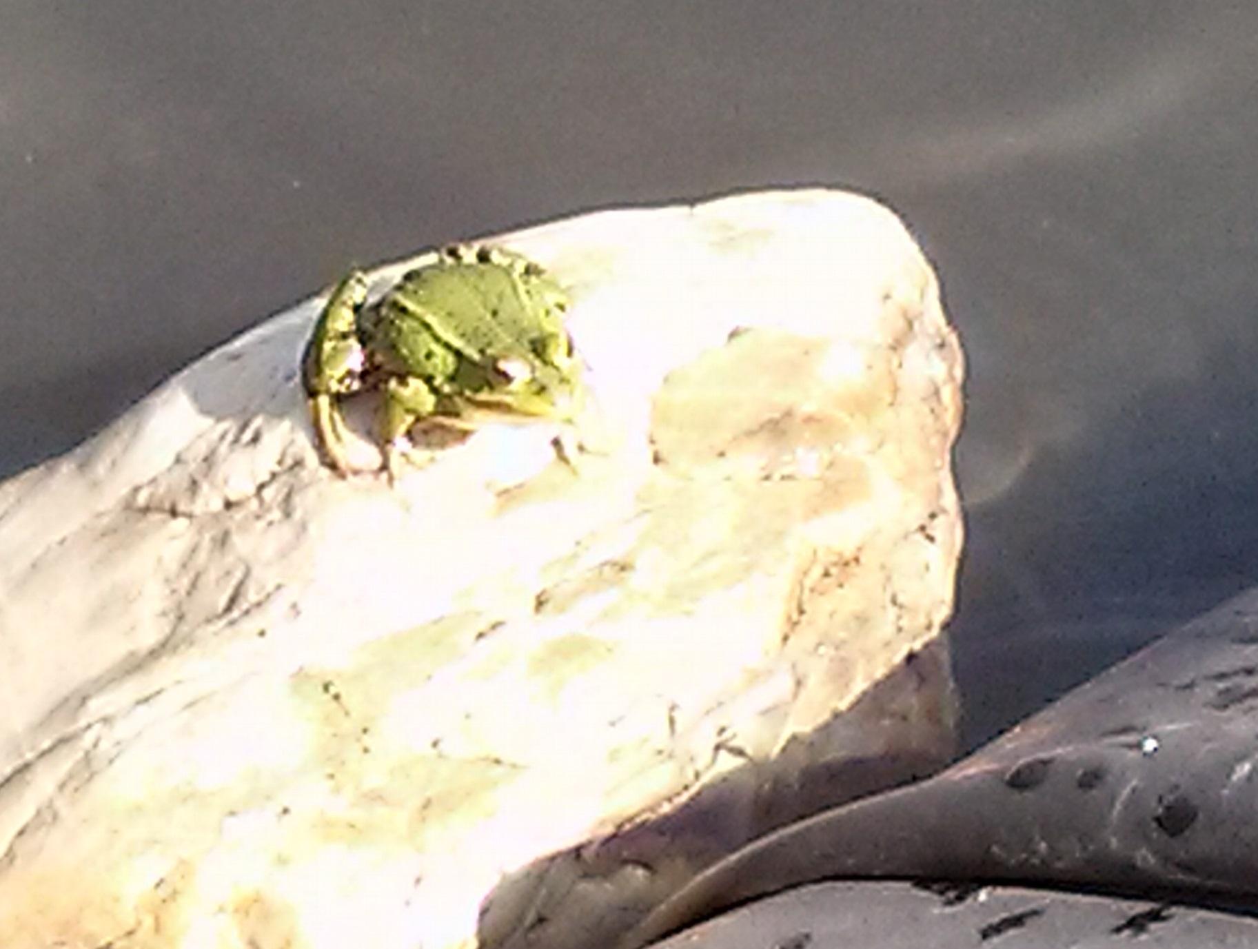 Und noch einer genießt sein neues Zuhause, ein Frosch.
