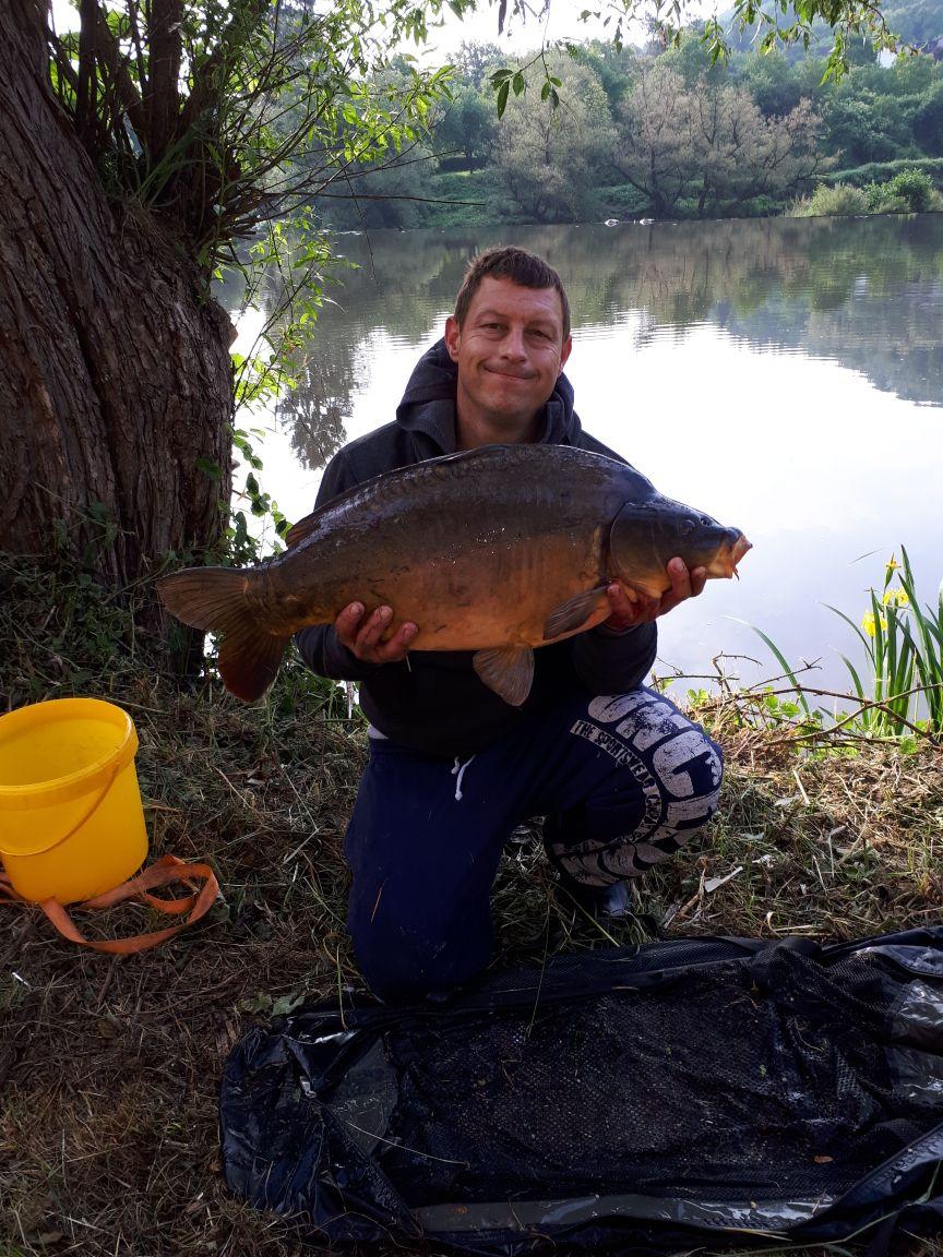 Spiegelkarpfen - 12 kg