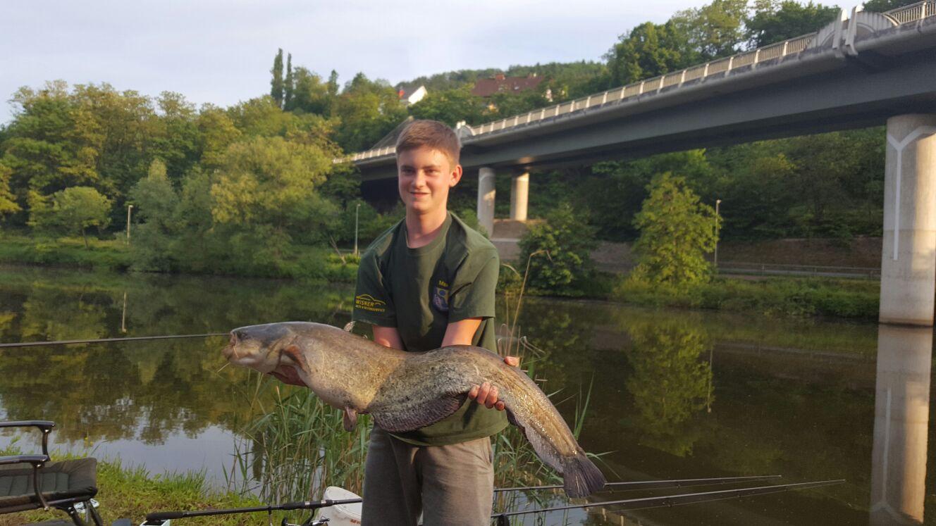 Wels 8,2 kg  1,03 m / Köder: Tauwurm (26.05.2016)