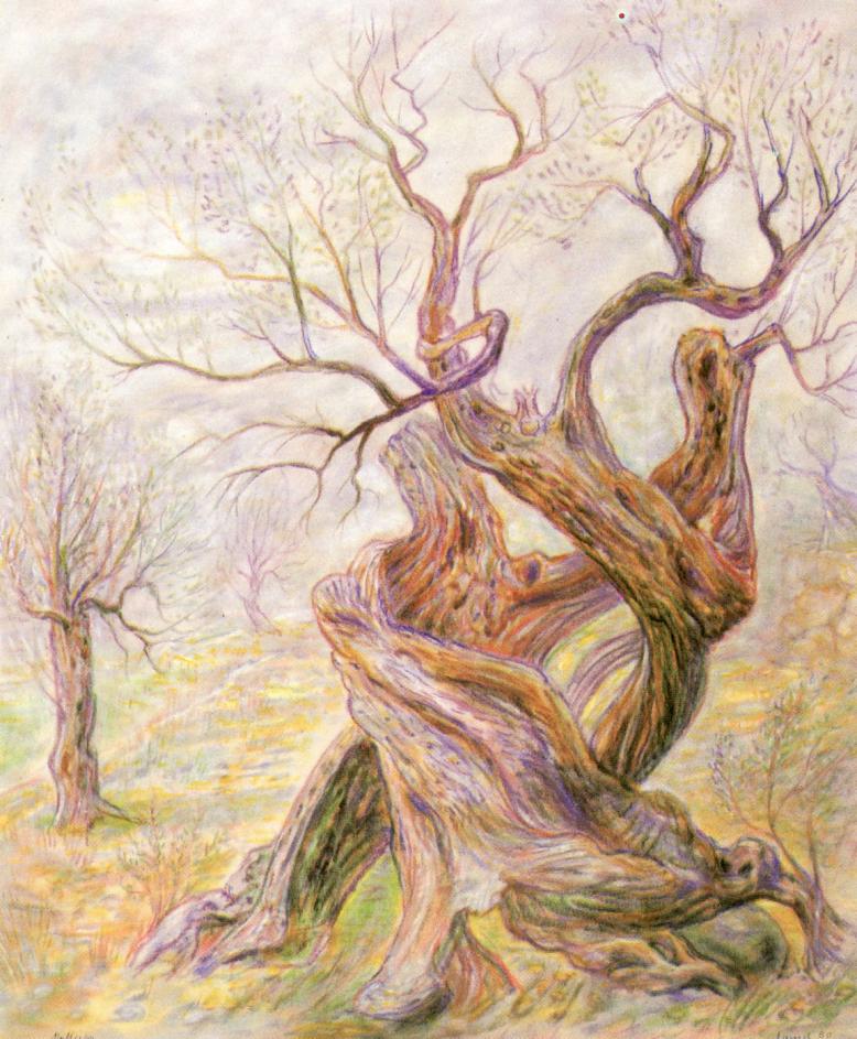 Alter Olivenbaum auf Mallorca, 1980