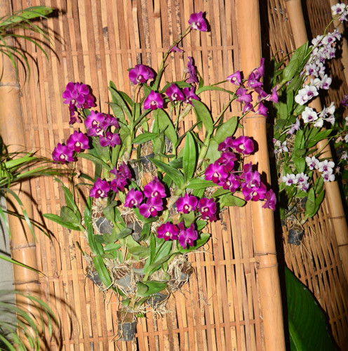 Blumenschmuck im Prince Hotel Bangkok