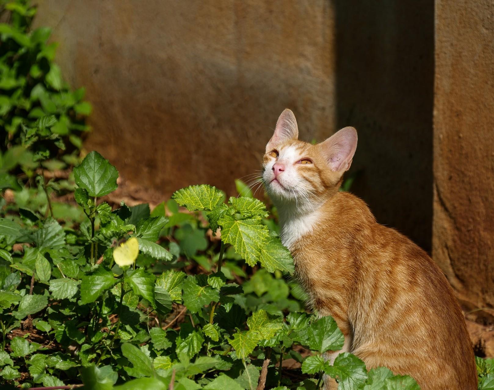 Ginger auf Mäusejagd