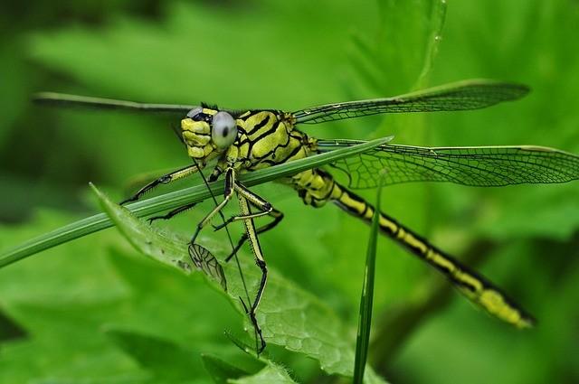 Améliorer le biotope des insectes