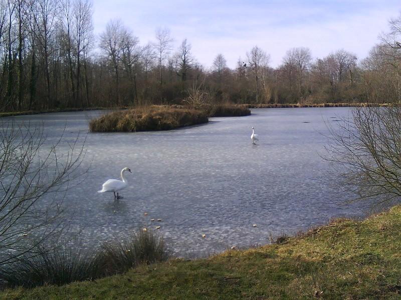 et hop, petites glissades sur les étangs
