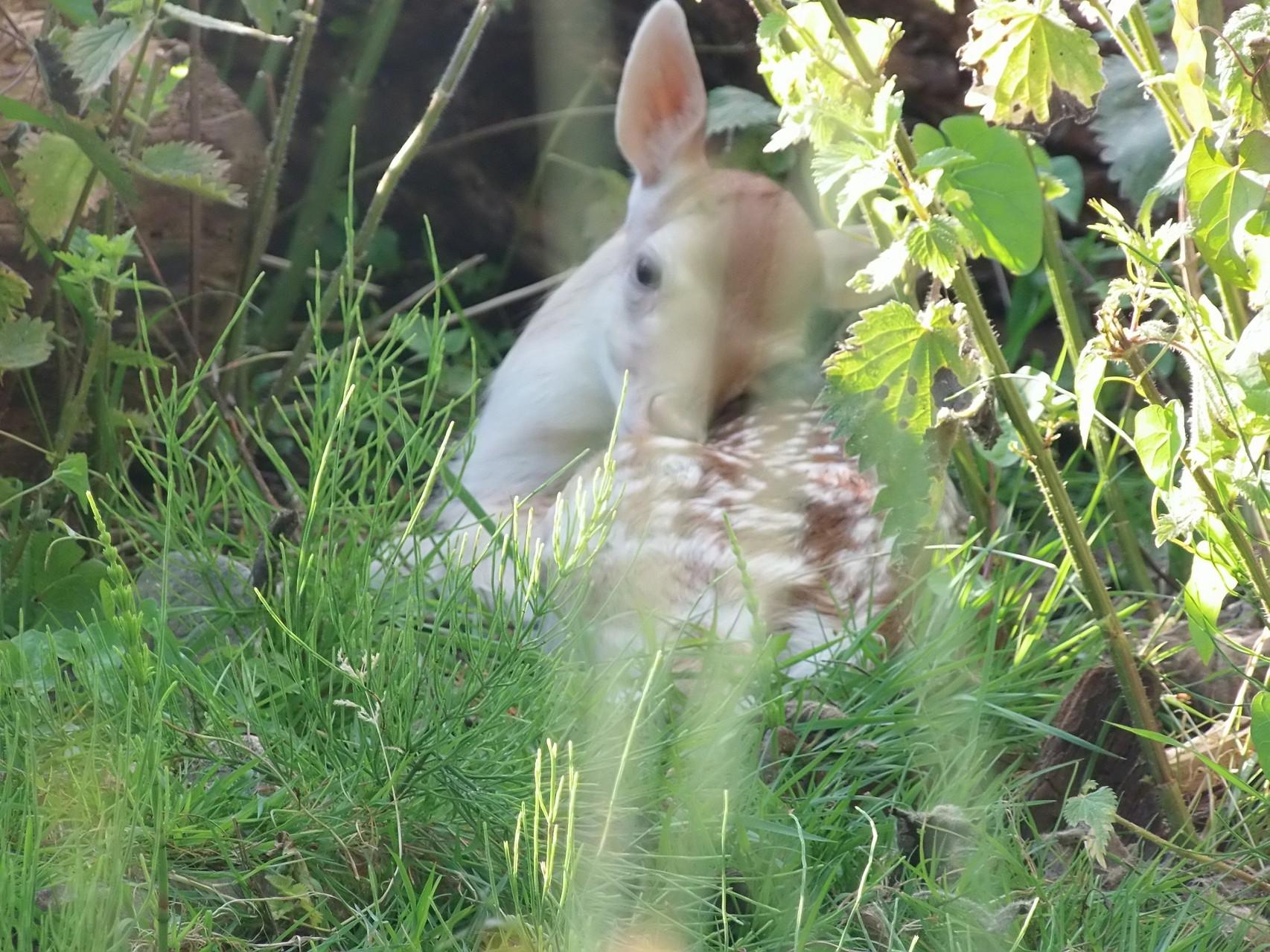 je me cache dans les herbes