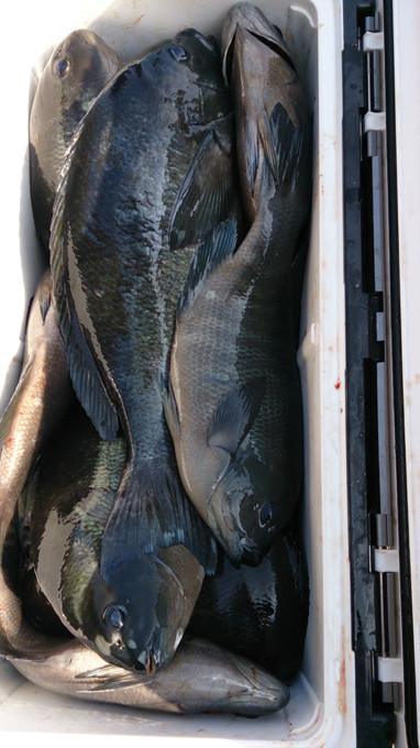ユーレイ〜小間南の釣果です