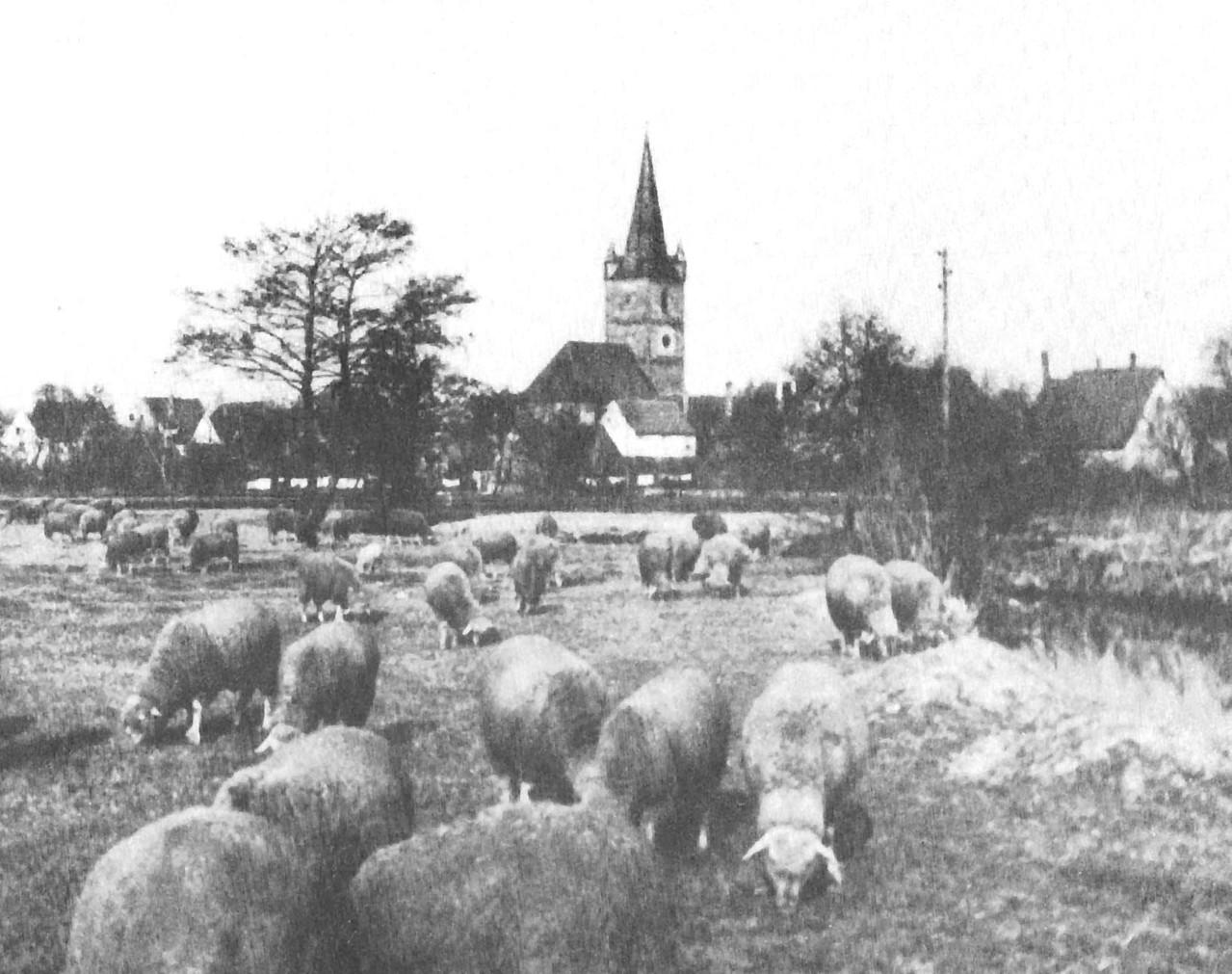 Die Schafweide auf den Regnitzwiesen. Rechts der Einfluss der Aurach in die Regnitz.