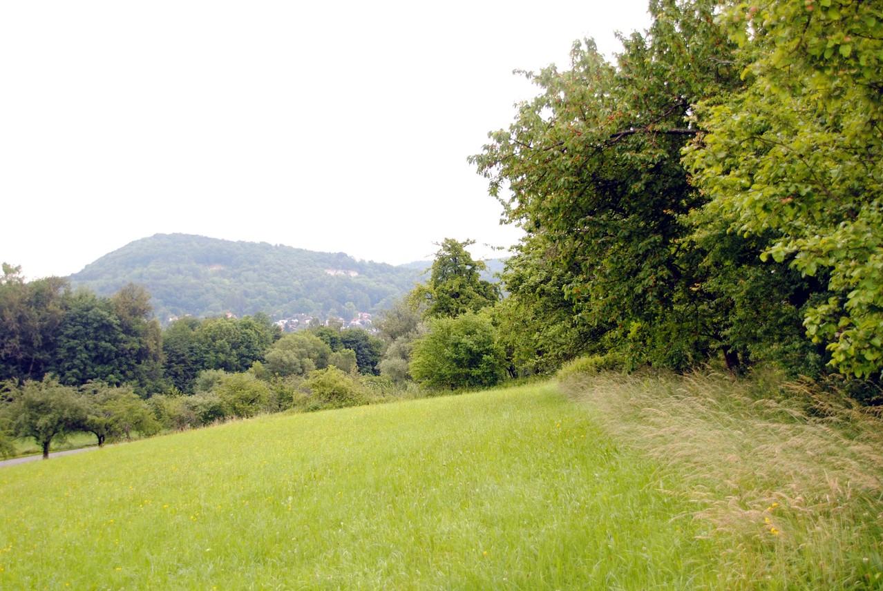Nordhang unterhalb des Bodendenkmals mit Blick nach Osten zur Houbirg. Links die Ortsverbindungsstraße Hersbruck-Happurg
