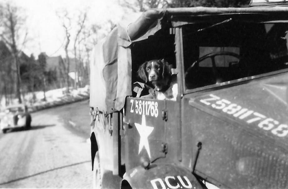 """Hund """"Annie"""" auf  dem Fahrersitz. """"DCU""""  = Demobbing Control Unit"""