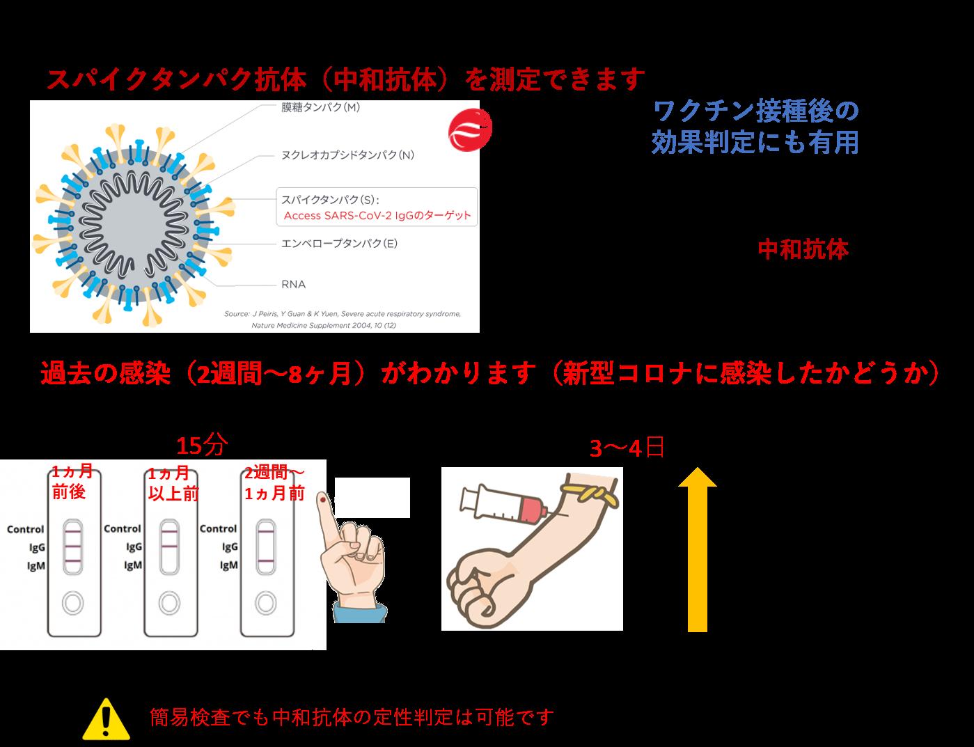 スパイク蛋白抗体(中和抗体)