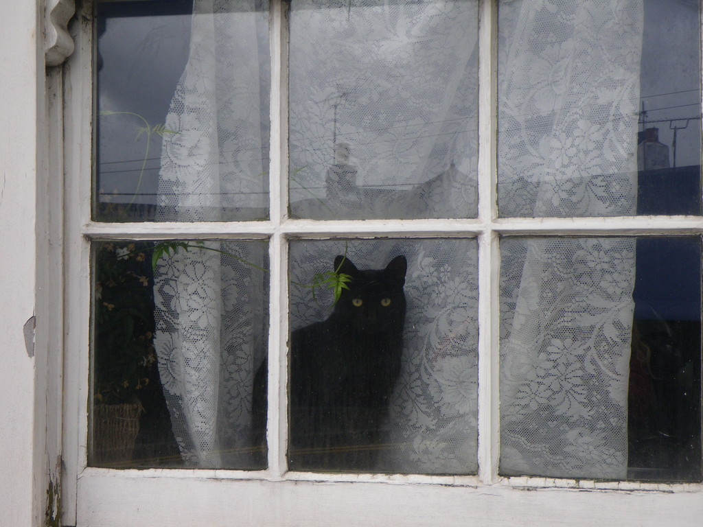 Cornish cat, Penryn, Uk (inseparables gato y ventana)