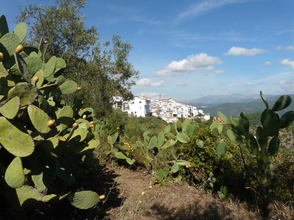 Algatocín, southern Spain