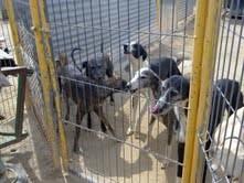Chiens au Refuge d'Arca de Noë   Albacete