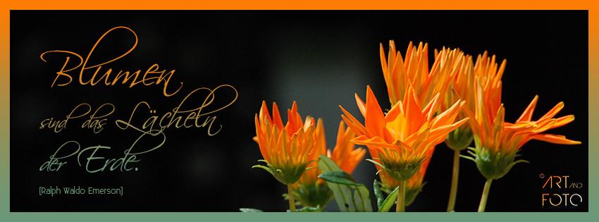 Blumen sind das Lächeln der Erde.  (Ralph Waldo Emerson)