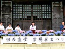 開催場所:千葉県成田市 宗吾霊堂宗吾霊堂紫陽花まつり