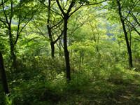 オオムラサキを育む新緑の大間々。