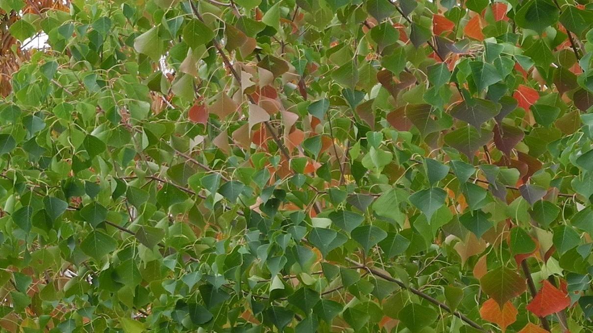 葉に葉に葉 /13.11.12
