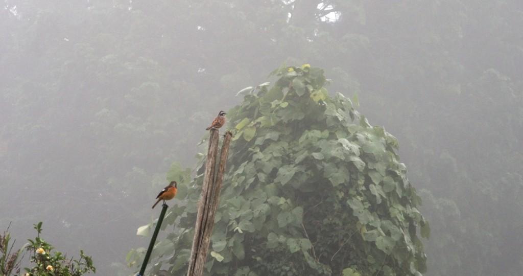 夏鳥のホオジロと冬鳥のジョウビタキ。朝一番に鳴く鳥の交代劇。 /13.10.28