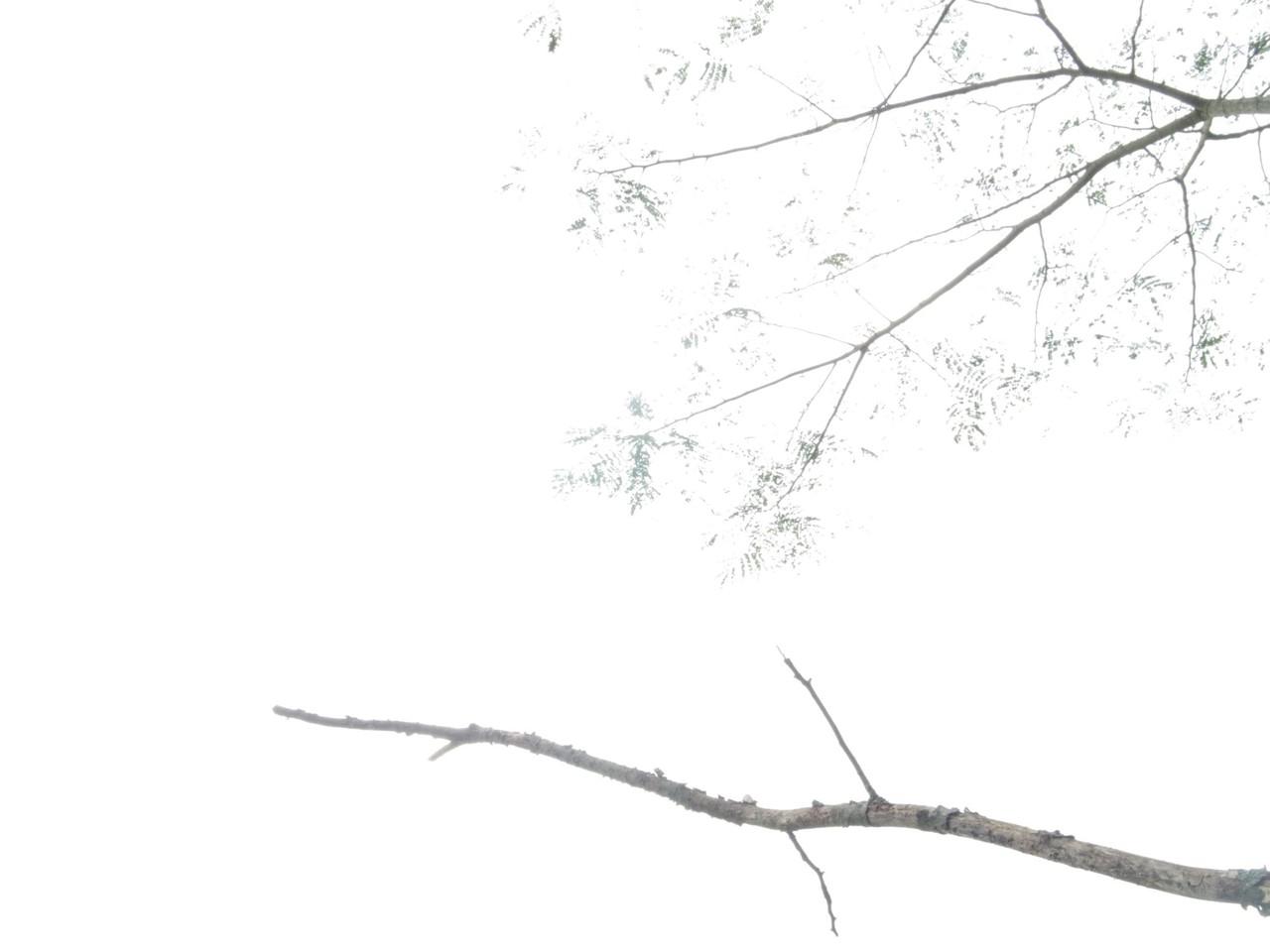 合 歓 /13.10.27