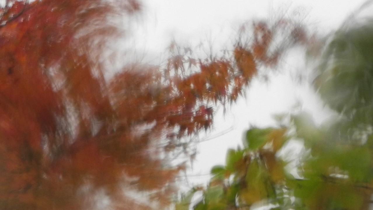 楓 /13.11.11