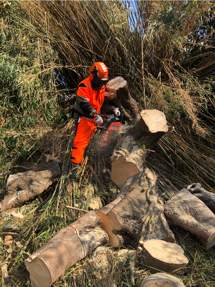 台風による倒木の伐採作業。作業者代表井出順二