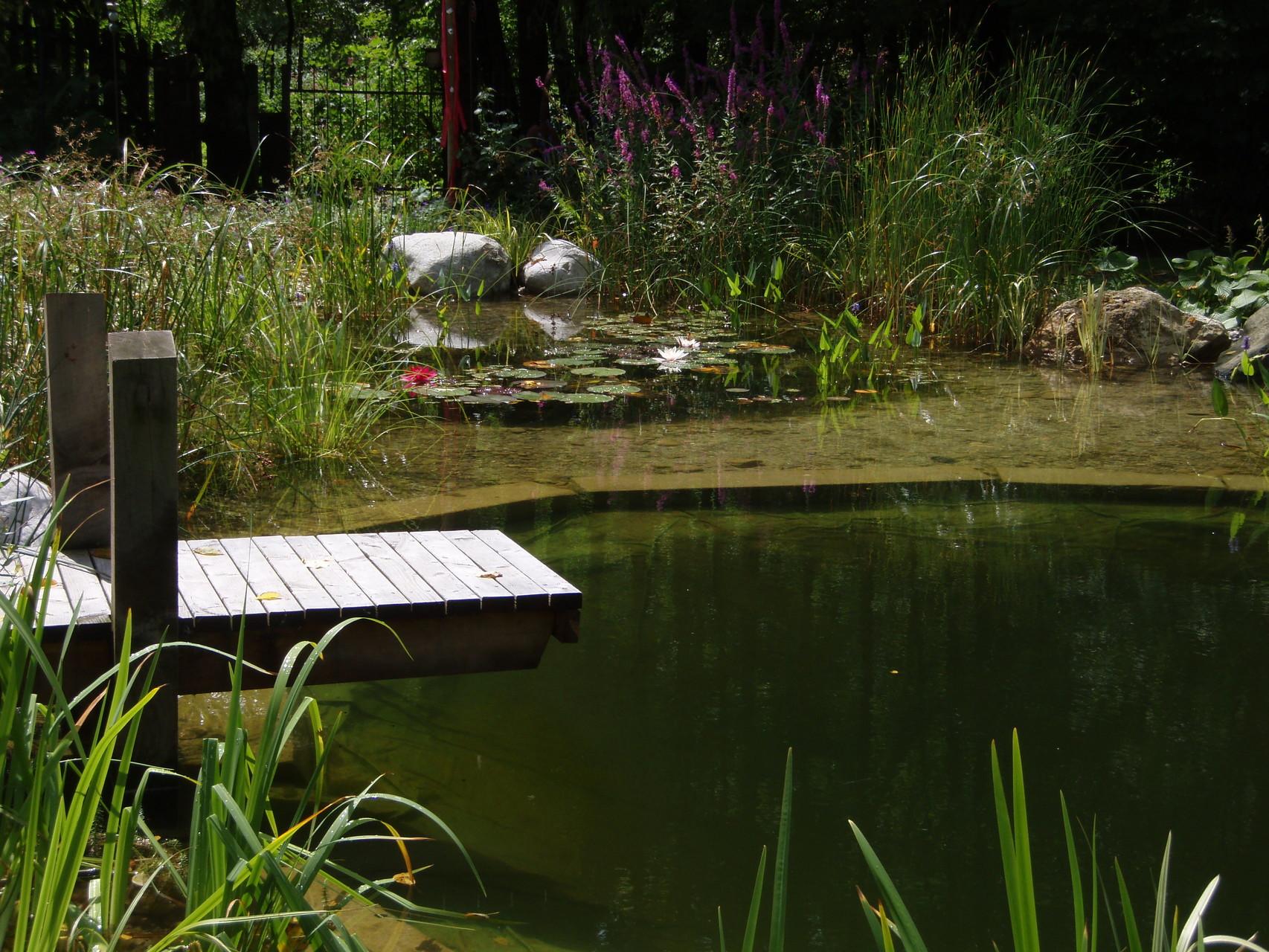 Neu Wasser Im Garten Design