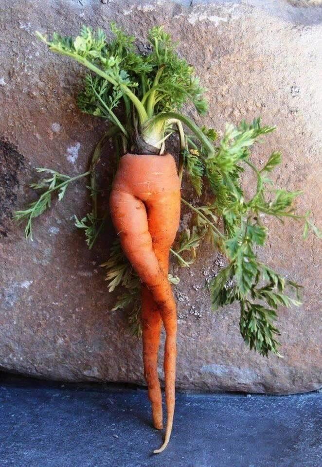 Miam des carottes