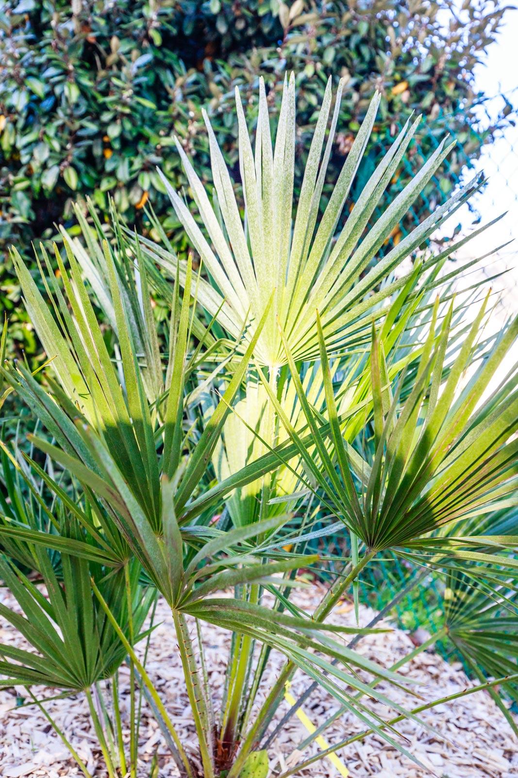 MANU-PAYSAGE-PAYSAGISTE-à-La-Baule-et-presqu'ile-de-guérande-création-de-jardin-plantation-taille-tonte-Loirat-Emmanuel (12)