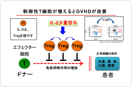 制御性T細胞が増えるとGVHDが改善