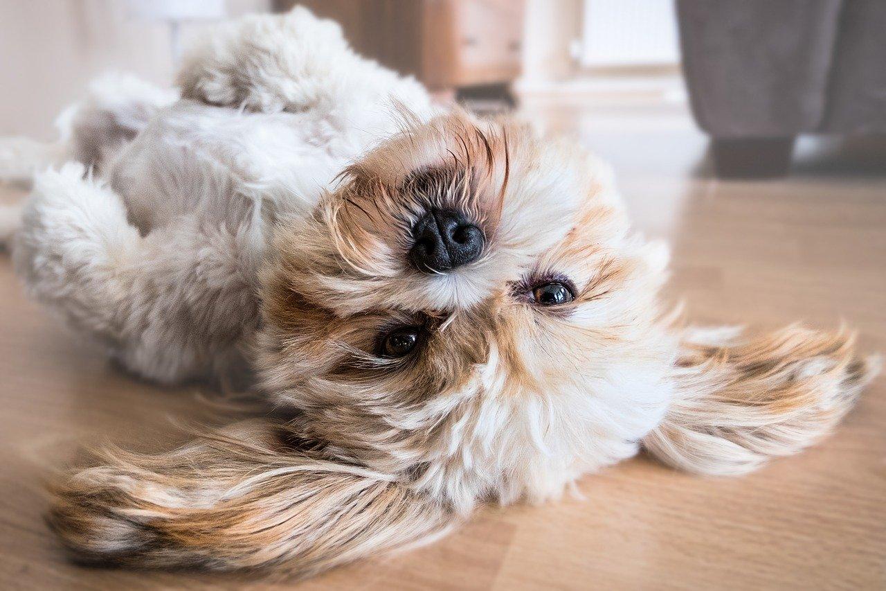 Warum hat mein Hund stumpfes Fell?