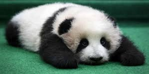 Panda Fauntleroy Blog Warnung