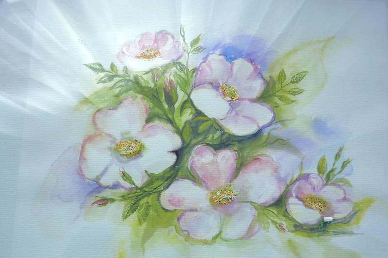Die Zartheit der Blumen berührt das Herz...
