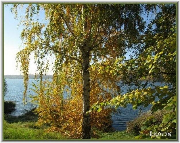 wundervolle Herbstimpressionen von Lilo