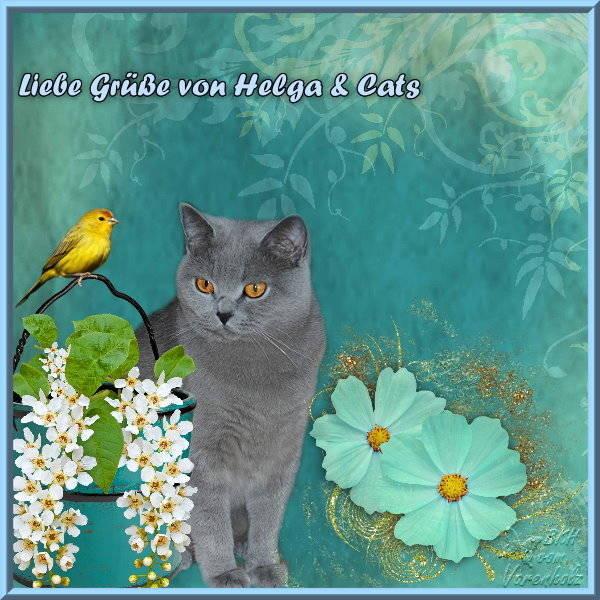 Helga & ihre wunderschönen Cats bringen auch Grüße.