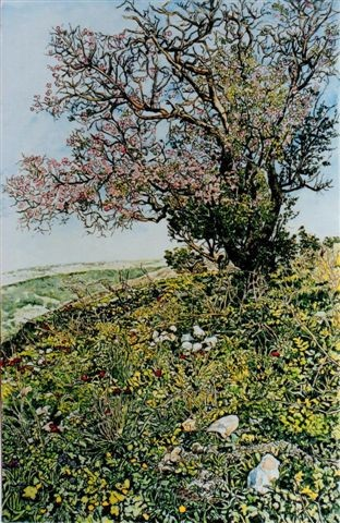 Blossoming almond tree and wild flowers, Upper Galilee, Israel, by Helen Bar-lev, Israel
