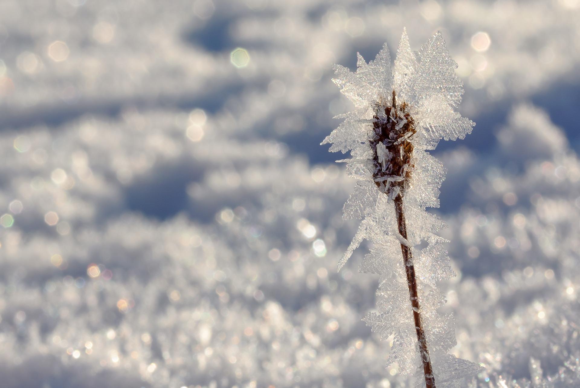Pflegetipps für den Winter