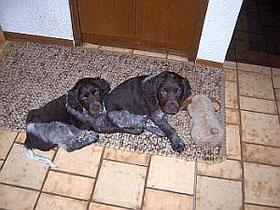 Diego und Duke