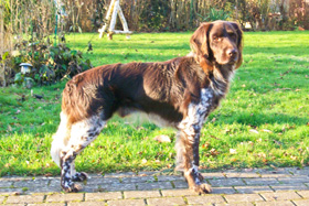 Concho vom Auenwald (Rufname Casper)