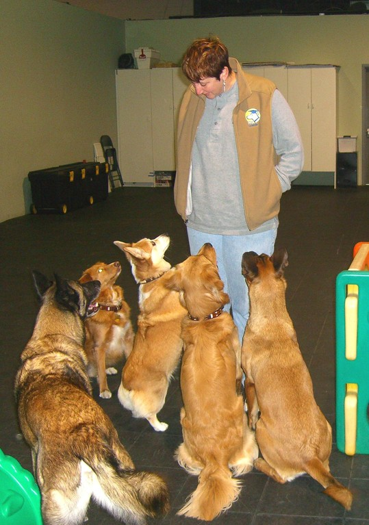 Dog Boot Camp New Jersey Nj Dog And Puppy Training Fix