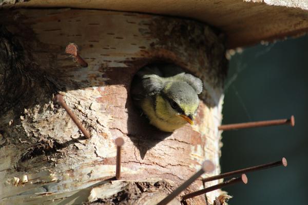 ... und die Miniflügelchen durchs Einflugloch gesteckt
