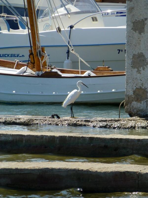 Hafen von Alcudia