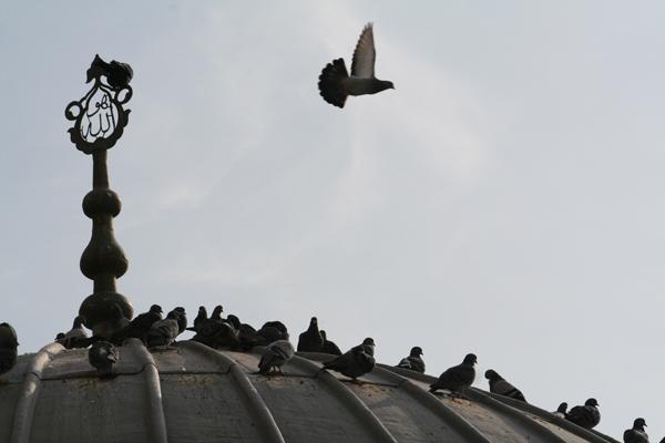 Fast so viele Tauben wie in Venedig ...
