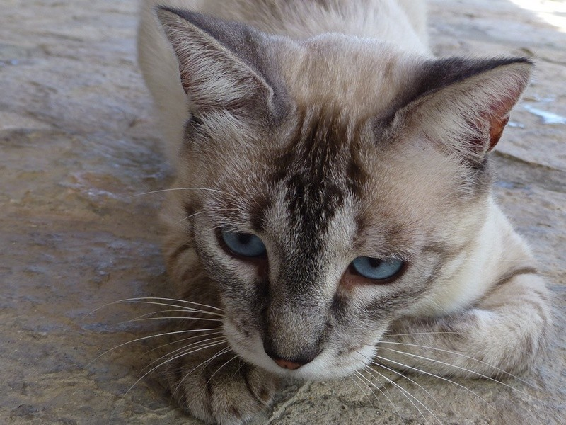 Finca-Katze