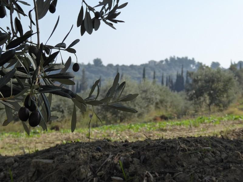 Könnte auch in der Toskana sein