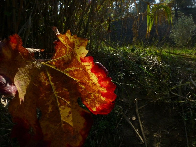 Herbststileben in der Pampa