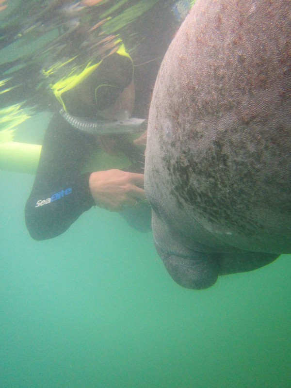 Me and the manatee