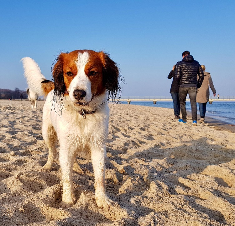 Sprotte am Strand