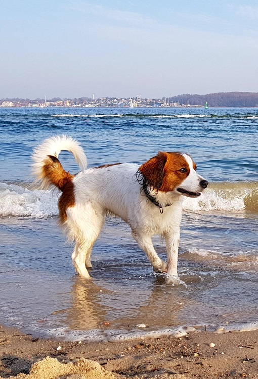 Alwine-Sprotte am Strand