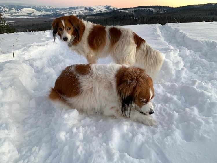 Rigby mit Freund Rupert am Neujahrstag 2019 in Wyoming